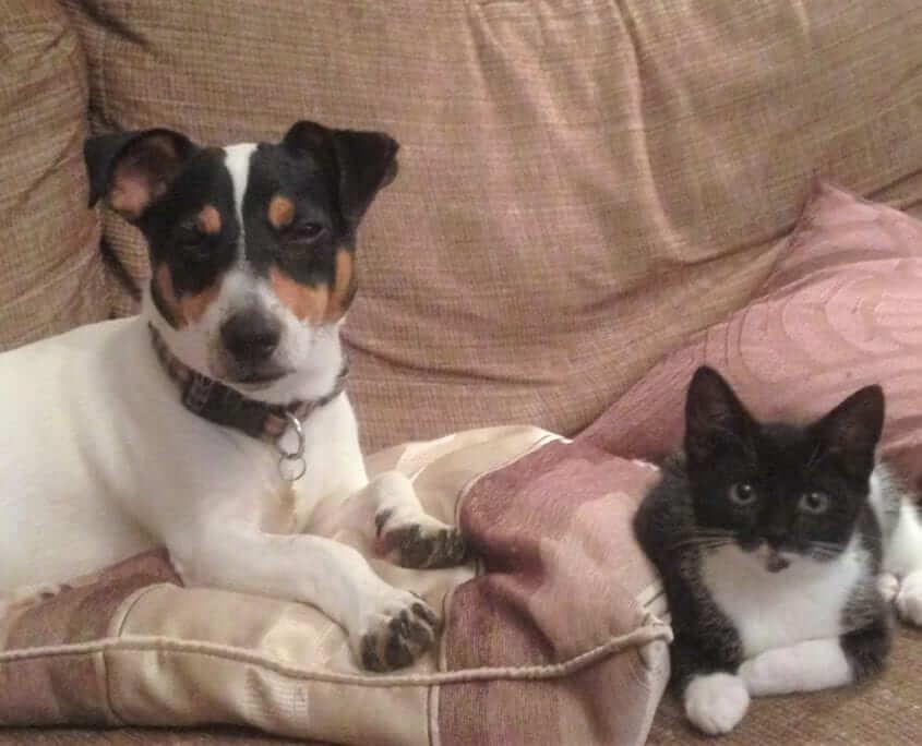Cushion-Dog-Cat